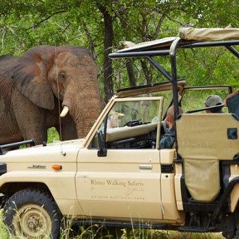 Rhino Post Safari Gaming Vehicles