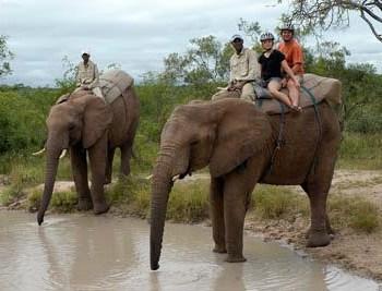 Manyatta Rock Camp Elephant Safari Elephants Drinking