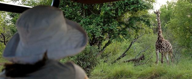 Manyatta Rock Camp Game Drive Giraffe