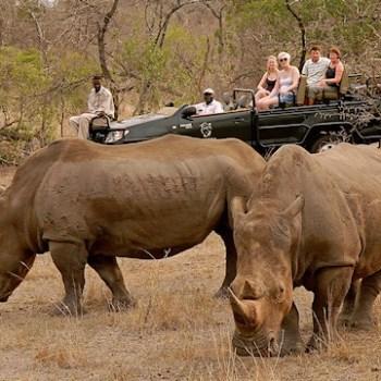 Manyatta Rock Camp Game Drive Rhinos