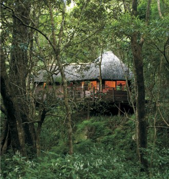 Serenity Forest Eco Reserve Forest Suite Surroundings