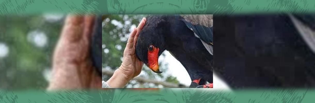 Shumbalala Game Lodge Bird Touching