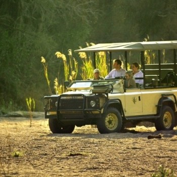 Hamiltons Tented Camp Game Drive
