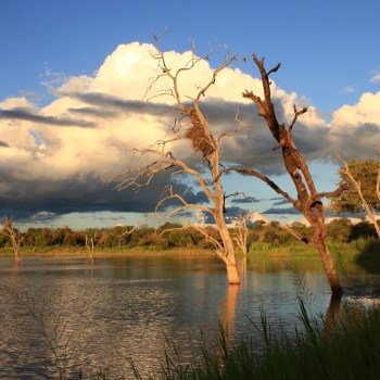 Motswari Private Game Reserve Lanscape Scenic View of the Riverbank