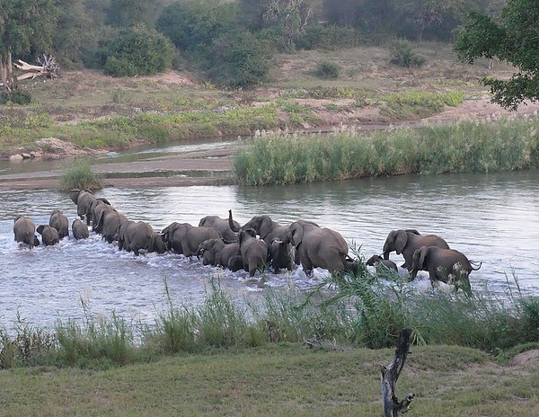 Baluleni Safari Lodge Elephant Migration