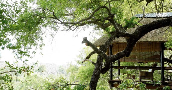 Londolozi Game Reserve More Camps