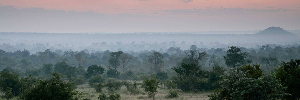 Londolozi Game Reserves Overviews