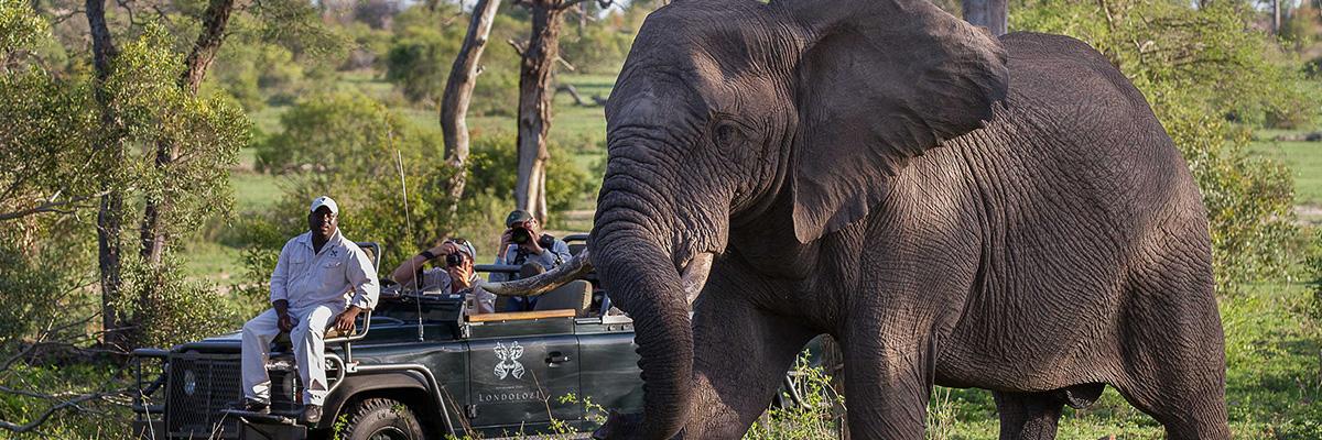 Londolozi Game Reserves Photo Safari