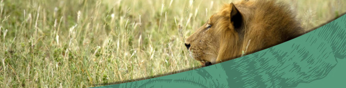 8 Days Idube, Phelwana and KRUGER PRIVATE RESERVES