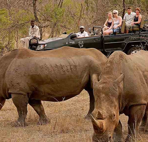 Manyatta Rock Lodge Game Drives Rhinos