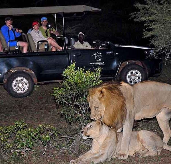 Manyatta Rock Lodge Game Drives at Night