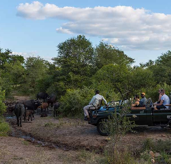 Monwana Game Lodge Game Drives