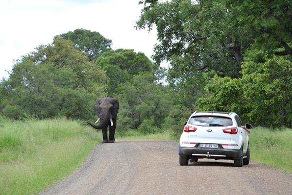 Kurhula Wildlife Lodge Game Drive Safari