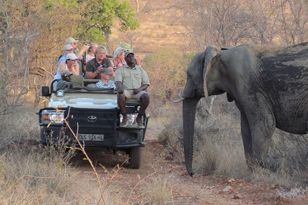 Mohlabetsi Safari Lodge Game Drive Safari Elephant