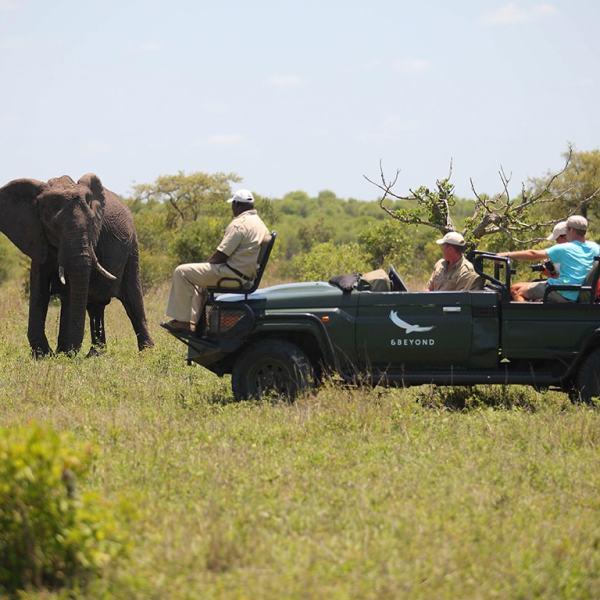 Ngala Safari Lodge Game Drive Safari