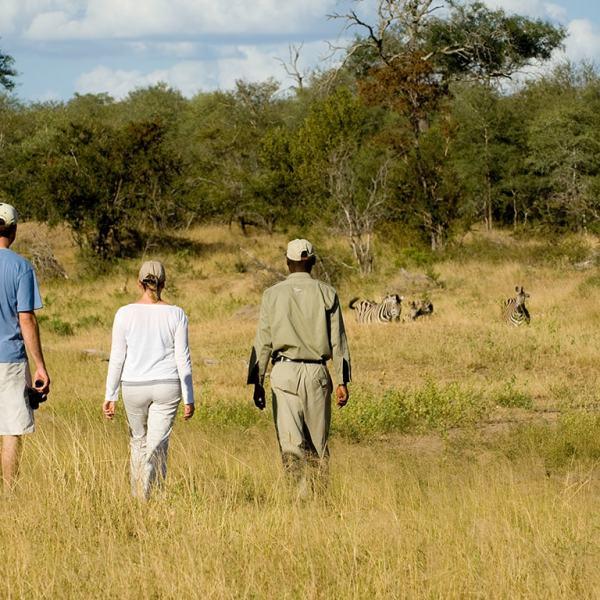 Ngala Safari Lodge Guided Walk