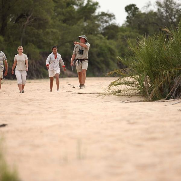Ngala Tented Camp Guided Walk
