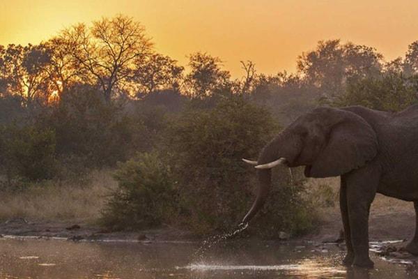 Pondoro Game Lodge Elephant