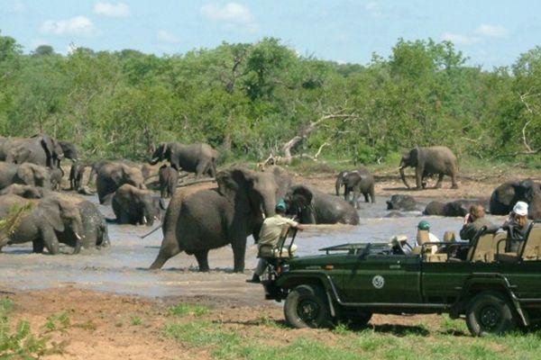 Pondoro Game Lodge Game Drive Safari