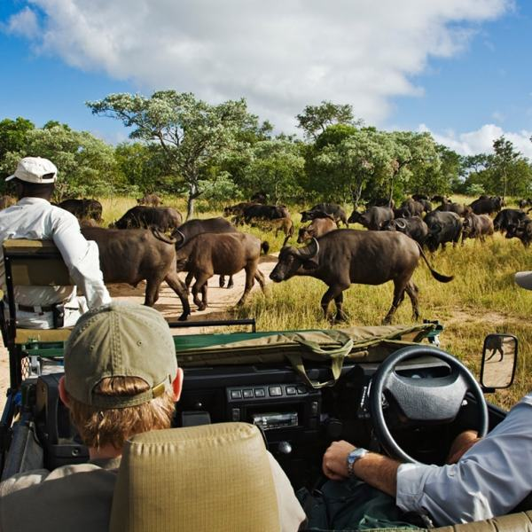 Royal Malewane Game Drive Safari