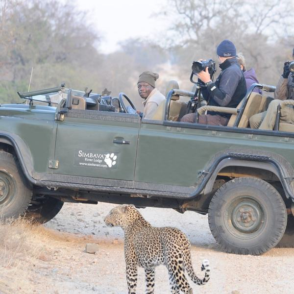 Simbavati Hilltop Lodge Game Drive Safari
