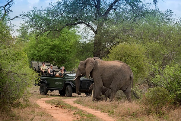 Tanda Tula Safari Camp Game Drive Safari