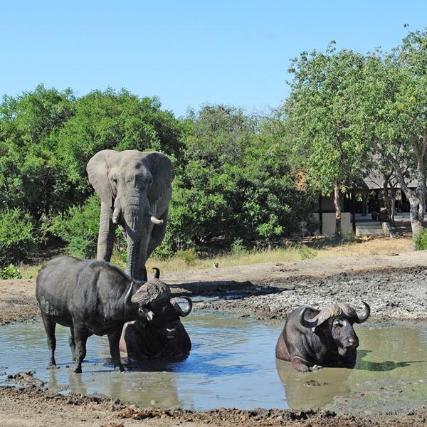Tangala Safari Camp Wildlife