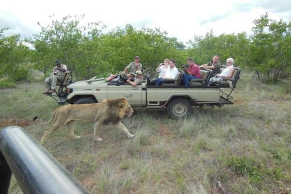 Toro Yaka Bush Lodge Game Drive Safari