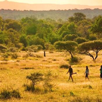 Kruger National Park Walking Safari