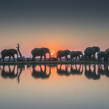 Camp Jabulani Herd Of Elephants