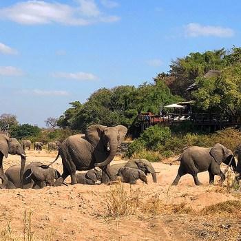 Jock Safari Lodge Elephants