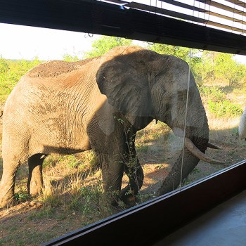 Makumu Private Game Lodge Elephant At The Window