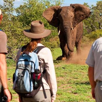 Makumu Private Game Lodge Elephant on a Bush Walk