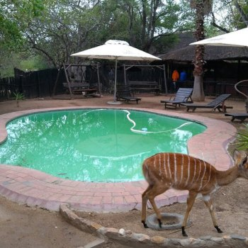 Marcs Treehouse Lodge Pool Area Wildlife