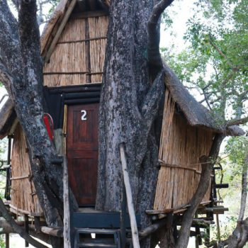 Marcs Treehouse Lodge Treehouse Exterior