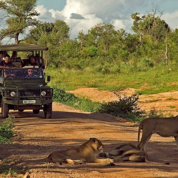 Mjejane River Lodge Game Drive Lion