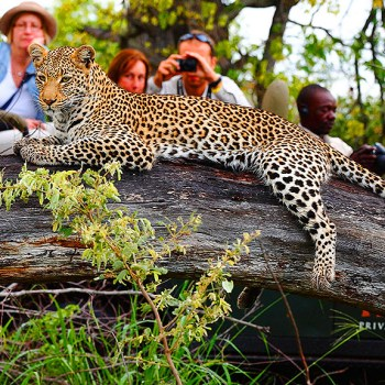 Motswari Private Game Reserve Leopard