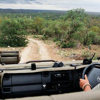 Naledi Bushcamp and Enkoveni Camp Game Drive