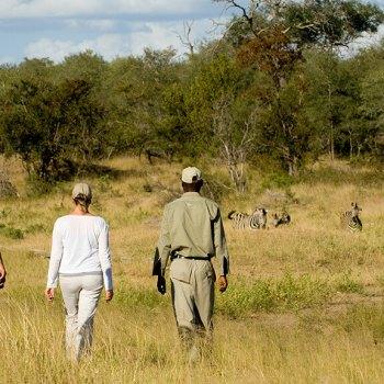 Ngala Safari Lodge Walking Safari