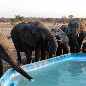 Nthambo Tree Camp Elephants Swimming Pool
