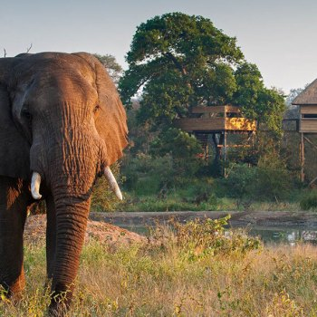 Pondoro Game Lodge Tree Suites Elephant