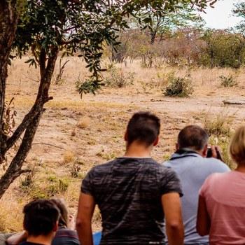 Shindzela Tented Safari Camp Game Viewing Lions