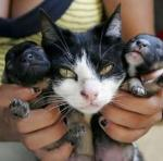 cat puppies