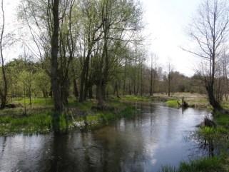 Rzeka Krępianka (fot. K. Furmanek)