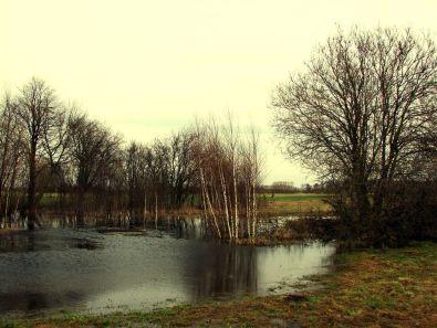 Źródła rzeki Krepianki (fot . arch. Gminy Rzeczniów)