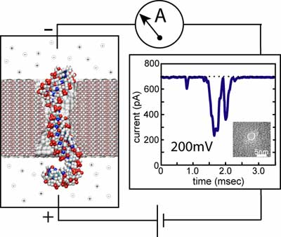 system for detection DNA with a nanopore