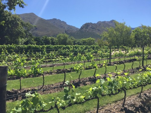 A visit to a wine farm in Cape Town area. Too early for wine tasting!