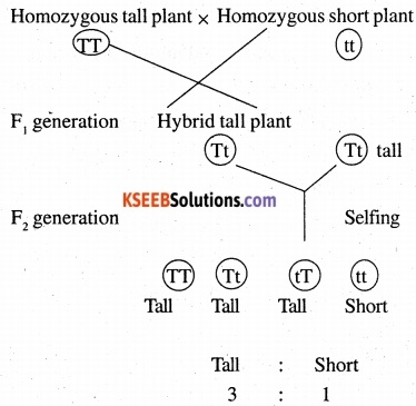 2nd PUC Biology Question Bank Chapter 5 Principles of Inheritance and Variation 1