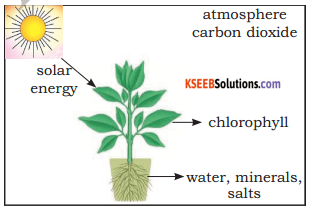 KSEEB Solutions for Class 5 EVS Chapter 1 Living World 6
