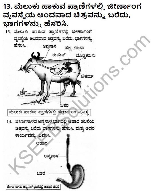 KSEEB Solutions for Class 7 Science Chapter 2 Pranigalalli Poshane 14